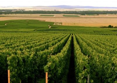 Wijnvelden champagne